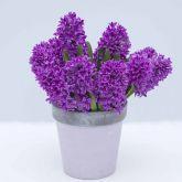 Гиацинты и луковицы летнего цветения